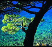 Mljet. @ Croatia Tourist Board