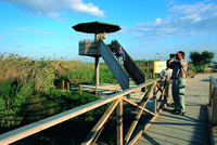 Birdwatching at Delta National Park