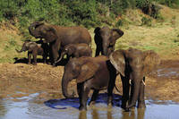 Addo Elephant National Park ©South African Tourism